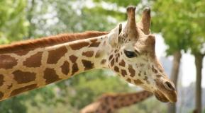 New York Zoos